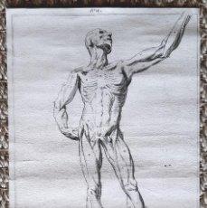 Arte: GRABADO ANATOMICO HUMANO DEL SIGLO XVIII. FRANCIA. Lote 217204457