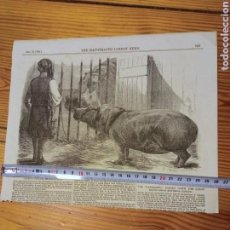 Arte: S.XIX BELLO RECORTE PRENSA 1854 . HIPOPÓTAMO ZOO. Lote 218927942