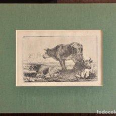 Arte: GRABADO- VACA CON TERNERO -VAN DER HECKE, JEAN, DIBUJANTE:VAN DER HECKE, JEAN (1620-1684). Lote 222022991