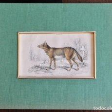 Arte: DOGS PUBLISHED BY W . H. LIZARS, EDINBURGH, 1839.-16,5 X 10,5 CM. Lote 222033005