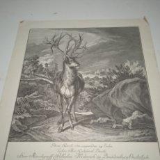 Arte: LITOGRAFÍA, GRABADO AL AGUA FUERTE RIDINGER. 1719. Lote 228969790