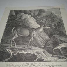 Arte: LITOGRAFÍA GRABADO AL AGUA FUERTE. RIDINGER 1739.. Lote 228970395