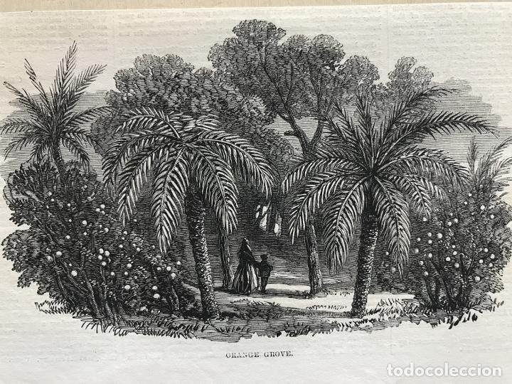 HUERTO DE NARANJOS EN VALENCIA (ESPAÑA), 1866. ANÓNIMO (Arte - Grabados - Modernos siglo XIX)