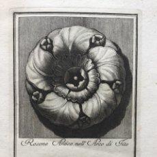 Arte: ROSONE ANTICO NELL ARCO DI TITO. CARLO ANTONINI. 1777. Lote 236761655