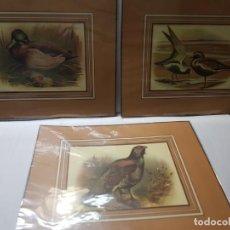Arte: GRABADOS ANTIGUOS DE ANIMALES LOTE 3 ENMARCADOS EN CARTON. Lote 241438850