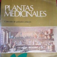 Arte: CARPETA CON 6 REPLICAS DE GRABADOS DE PLANTAS MEDICINALES ANTIGUAS. 35 X 28 CM. AÑO 1975. Lote 244677165