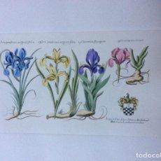 Arte: 4 GRABADOS FLORALES A COLOR 35CMX 20CM SIN MÁRGENES.. Lote 244714415