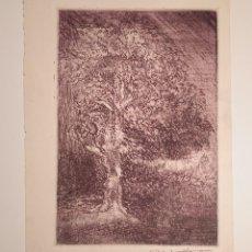 Arte: MANUEL ARISTIZÁBAL - GRABADO DE ÁRBOL. ROBLE. FIRMADO EN 1944. Lote 247700190