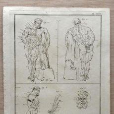 Arte: ANTIGUO GRAN GRABADO S. XVIII DISEÑO: LAS PROPORCIONES HERCULES FARNESIO . FRANCIA GAY INT.. Lote 254439940