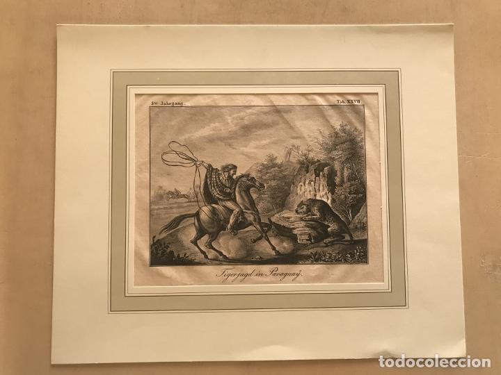 Arte: Caza del jaguar en Paraguay (América del sur), 1832. Baumann - Foto 2 - 260831345