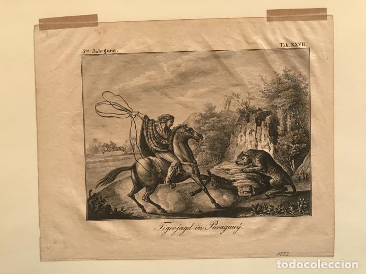 Arte: Caza del jaguar en Paraguay (América del sur), 1832. Baumann - Foto 3 - 260831345