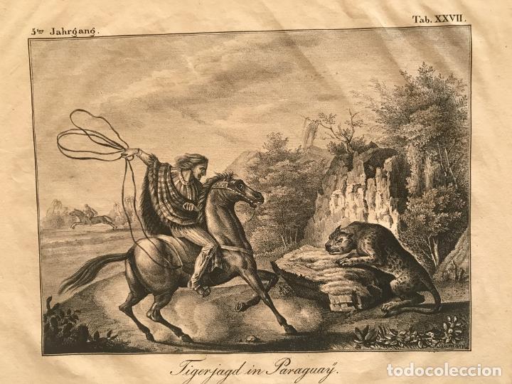 Arte: Caza del jaguar en Paraguay (América del sur), 1832. Baumann - Foto 4 - 260831345