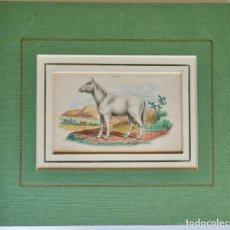 Arte: VILLOUS HORSE - 1841 PRIMOEVAL WHITE STOCK -'NATURALIST'S LIBRARY'. Lote 268034074