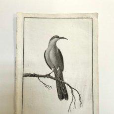 Arte: GRABADO ANTIGUO XVIII SUGARBIRD CALIFORNIA 1797 - LA PÉROUSE. Lote 268883874