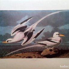 Arte: AUDUBON, JOHN JAMES. - TROPIC BIRD. PHAETON AETHEREUS.. Lote 269655268