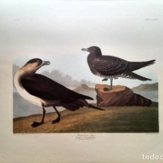 Arte: AUDUBON, JOHN JAMES. - RICHARDSON´S JAGER. LESTRIS ROCHARDSONII.. Lote 269655273