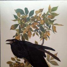 Arte: AUDUBON, JOHN JAMES. - RAVEN. CORVUS CORAX.. Lote 269655323