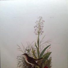 Arte: AUDUBON, JOHN JAMES. - TAUNY THIUS. TURDUS WILSONLI.. Lote 269655338