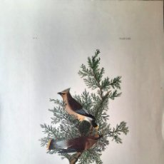 Arte: AUDUBON, JOHN JAMES. - CEDAR BIRD. BOMBYCILIA CAROLINENSIS.. Lote 269655343