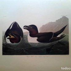 Arte: AUDUBON, JOHN JAMES. - RAZOR BILL. ALCA TORDA.. Lote 269655363