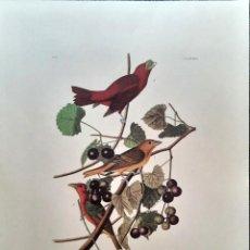 Arte: AUDUBON, JOHN JAMES. - SUMMER RED BIRD. TANAGRA AESTIVA.. Lote 269655368