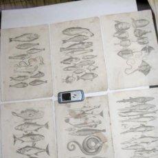 Arte: SIGLO XVII XVIII ORIGINALES - 6 GRABADOS GRANDES FAUNA MARINA PECES MONSTRUOS. Lote 25218728