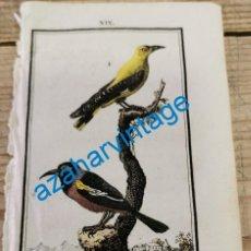 Arte: 1806,-BUFFON-GRABADO ILUMINADO-HISTORIA NATURAL DE LAS AVES, LA OROPENDOLA Y EL TRUBIAL. Lote 287750578