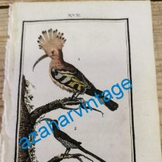 Arte: 1806,-BUFFON-GRABADO ILUMINADO-HISTORIA NATURAL DE LAS AVES, LA ABUBILLA Y EL PROMEROPE,85X135MM. Lote 287750883