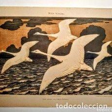 Arte: PRECIOSO GRABADO ART NOUVEAU CIRCA 1900 ANTIQUE UNIQUE. Lote 288537943
