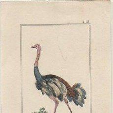 Arte: GRABADO DE ANIMALES. EL AVESTRUZ. 15X10,2 CM. AÑO 1833 G-ANIM-050. Lote 297164458