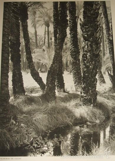 ELCHE ALICANTE PALMERAL HUECOGRABADO AÑOS 40 (Arte - Huecograbado)