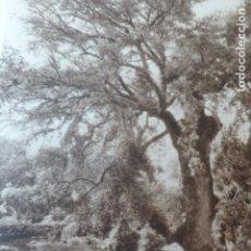 Arte: ESCORCA MALLORCA ENCINA ANTIGUO HUECOGRABADO 1928. Lote 275582478
