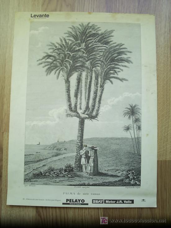 PALMERA DE SIETE BRAZOS * REPRODUCCIÓN * (Arte - Láminas Antiguas)