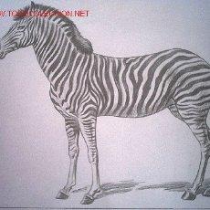 Arte: 24 ANTIGUAS LAMINAS DIBUJO DE ANIMALES , EMILIO FREIXAS. Lote 26012089