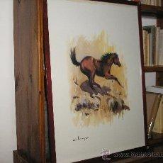 Arte: LAMINA ENMARCADA 73 X 53 CM. MOTIVO CABALLOS-2 CON MARCO DE CAOBA. Lote 26056859
