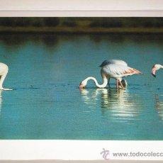 Arte: LAMINA Nº 10 FLAMENCOS - MEDIDAS 25 X 20 CM.. Lote 26761270