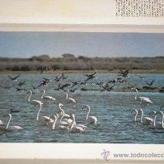 Arte: LAMINA Nº 18 FLAMENCOS Y PATOS - MEDIDAS 25 X 20 CM.. Lote 24861506