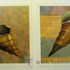 Arte: 2 LAMINAS. Lote 18968141