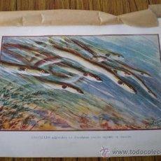 Arte: 10 LAMINAS DE PECES .. DE C F ANGEL 1928 . Lote 24623935