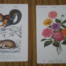 Arte: 2 LAMINAS .. PLANTAS Y ROEDORES. Lote 29724590
