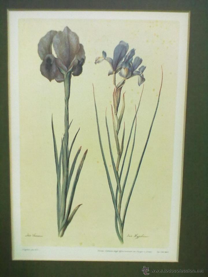 galeria uffizi 6 laminas botanica enmarcadas co - Comprar Láminas ...