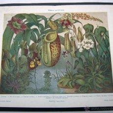 Arte: 1900 ESPASA - BELLA LAMINA COLOR PLANTAS INSECTIVORAS CARNIVORAS. Lote 52415590