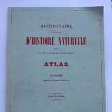 Arte: LÁMINAS DE PECES DICTIONNAIRE D'HISTOIRE NATURELLE.READER'S DIGEST. Lote 58118606