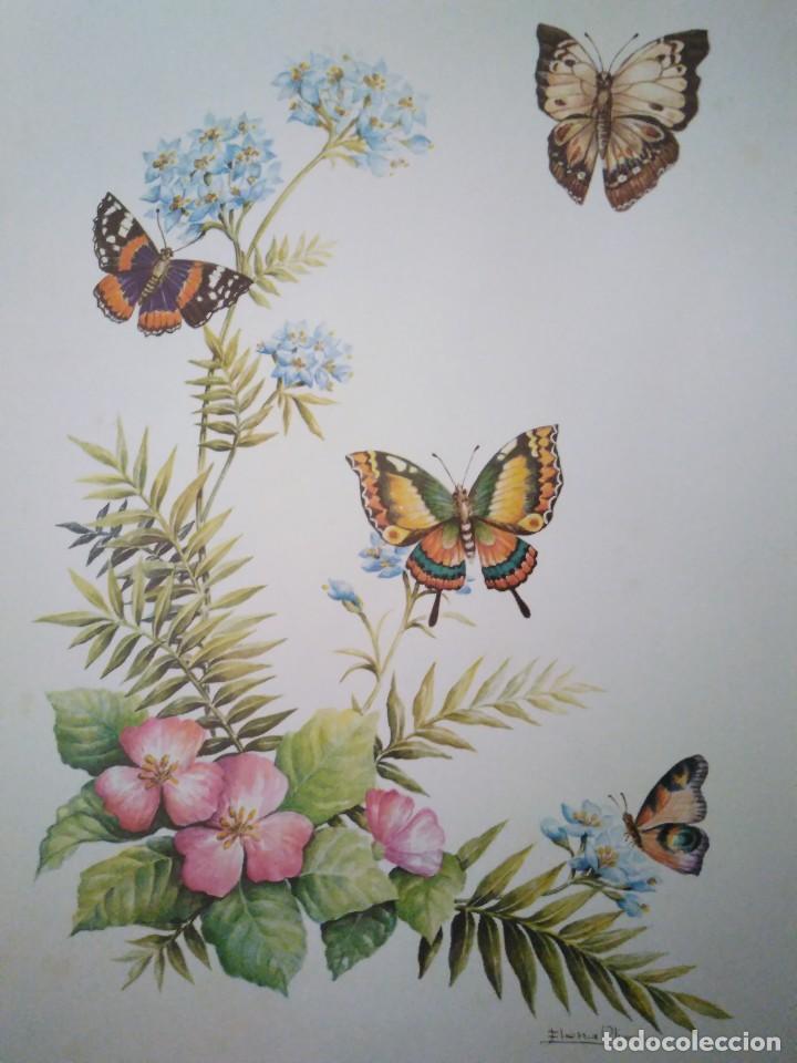 LÁMINA NUMERADA. 30 X 24 CM (Arte - Láminas Antiguas)
