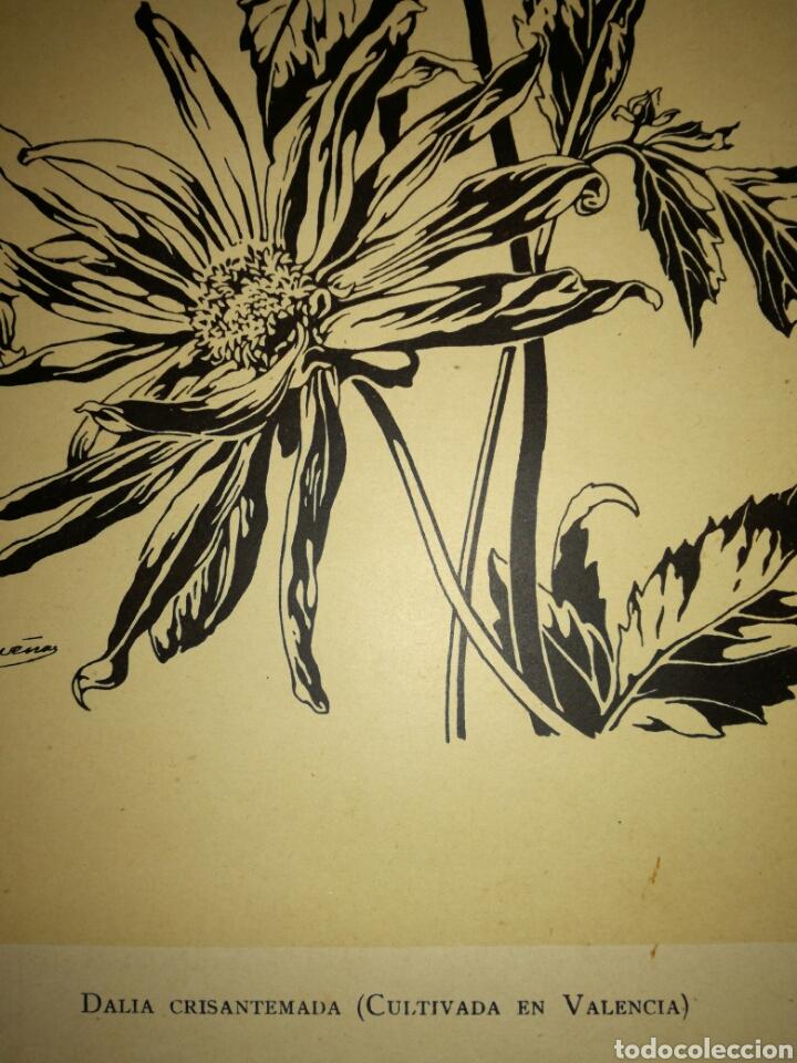 Arte: Antigua lámina de dibujo - Foto 3 - 108929199