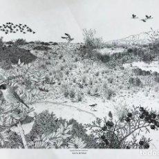 Arte: JOSÉ MANUEL MIRALLES GARCÍA . PUNTA ENTINAS. Lote 112314539