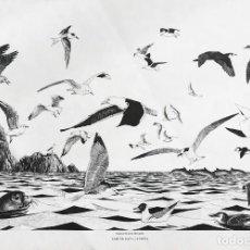Arte: JOSÉ MANUEL MIRALLES GARCÍA . CABO DE GATA: LA COSTA. Lote 112315063