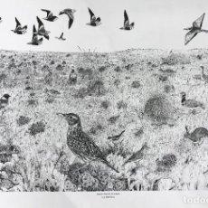 Arte: JOSÉ MANUEL MIRALLES GARCÍA . LA ESTEPA. Lote 112315299