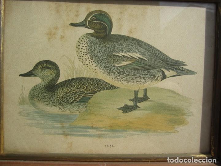 Arte: 2 laminas de patos - Foto 2 - 137790682