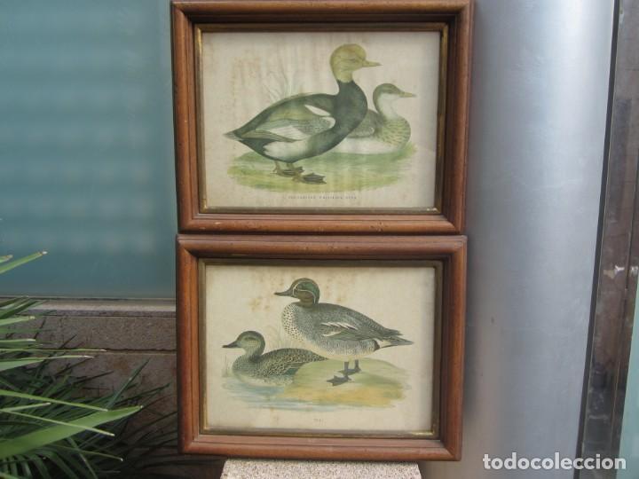 Arte: 2 laminas de patos - Foto 4 - 137790682